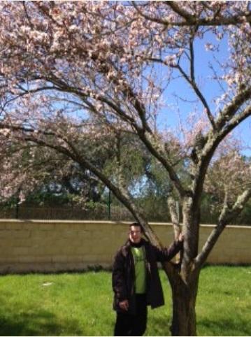 Me gustan los cerezos en flor :D